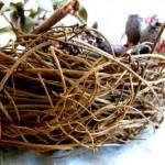 My Nest