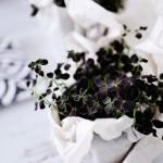 trifolium-2